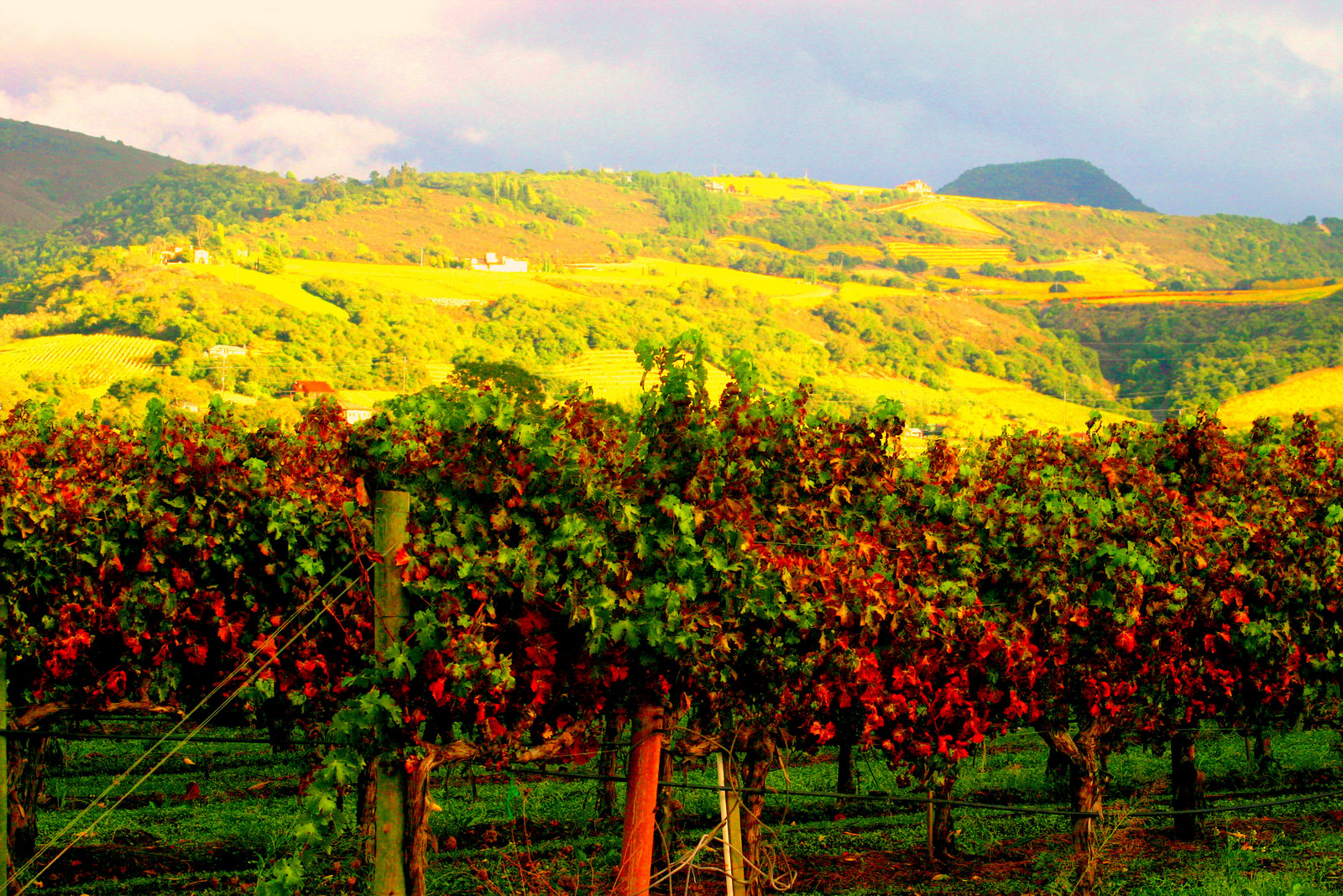 The 6 best business travel destinations this summer for Best time to visit napa valley wine country