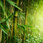 This Surprising Secret About Bamboo Could Be The Reason You're Not Successful