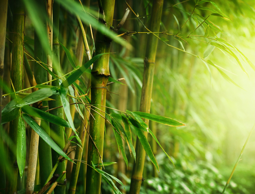 Bamboo Strong